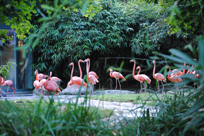Schnönbrunn állatkert