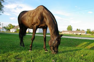 Saját ló