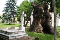 Gróf Khuen-Héderváry síremlék ,Árpád fa (Árpád-tölgy)